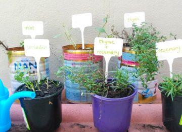 beginner herb garden