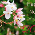 Happy 2016! …changes to the blog