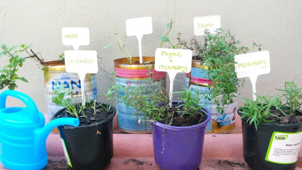 my beginner herb garden