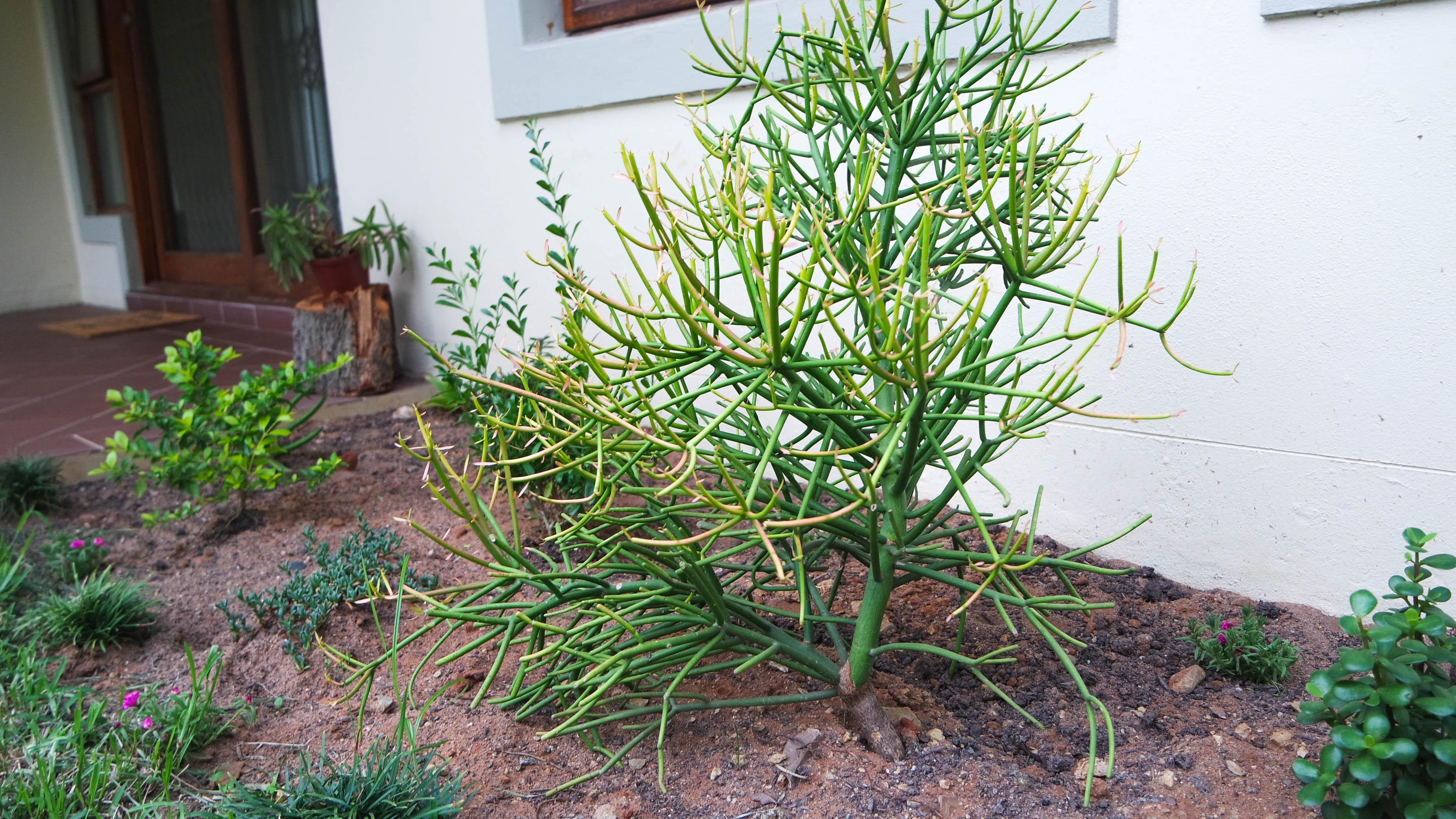 Indigenous Durban plants